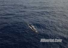 Aerial Cinematographer Documentary